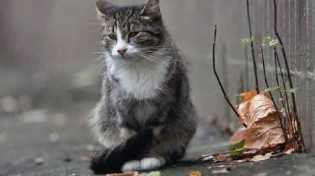 Преданность котейки, который остался один, и неподвижно ждал свою хозяйку