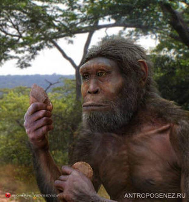 Эволюция человека и человеческих мозгов Теория эволюции, Эволюция, Антропогенез, Наука, Познавательно, Гифка, Длиннопост