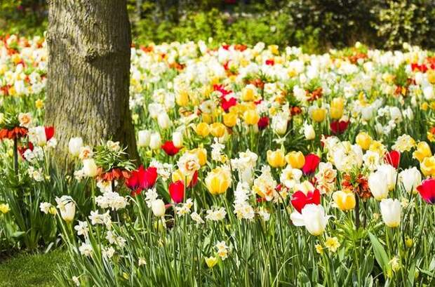 Какие цветы можно сажать под деревьями