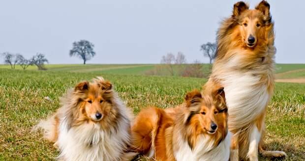 Тест: Хорошо ли вы разбираетесь в породах собак?