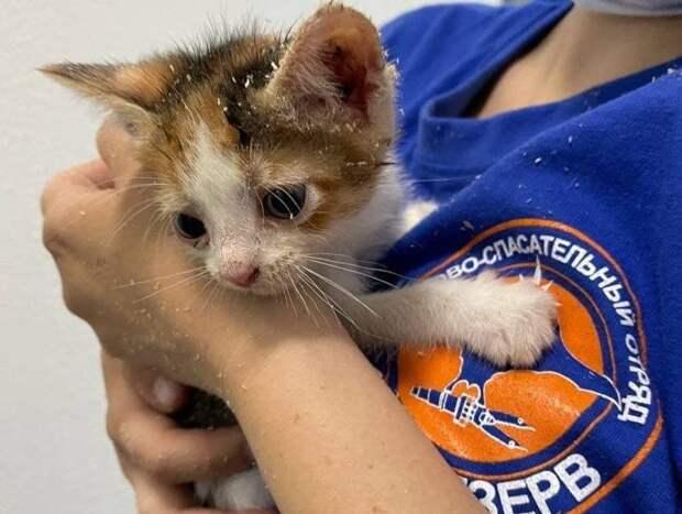 Спасатели вызволили двух котят из дверной ловушки в Некрасовке