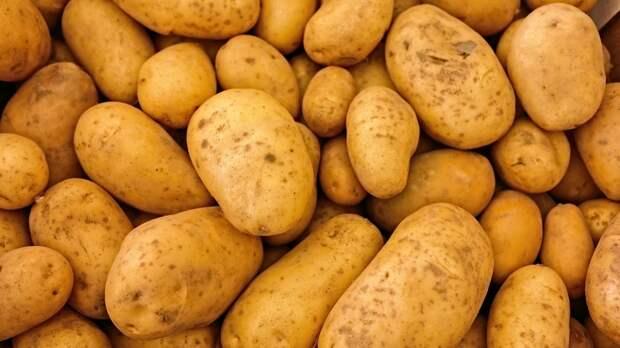 Жителям Подмосковья дали советы по посадке картофеля