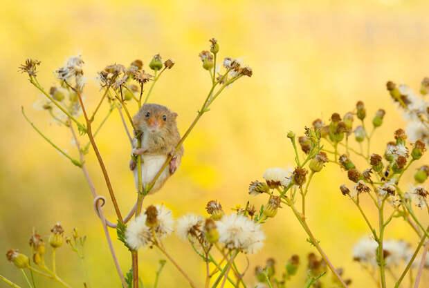 Вобъективе— мышки-малютки