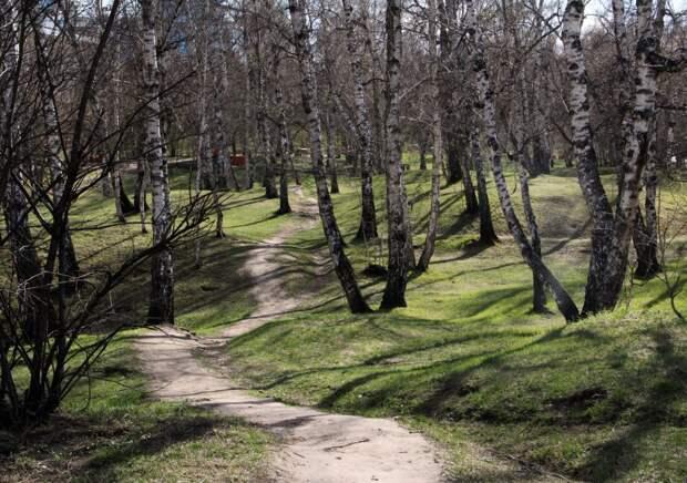 За две недели в Иркутской области от укусов клещей пострадали 1054 человека