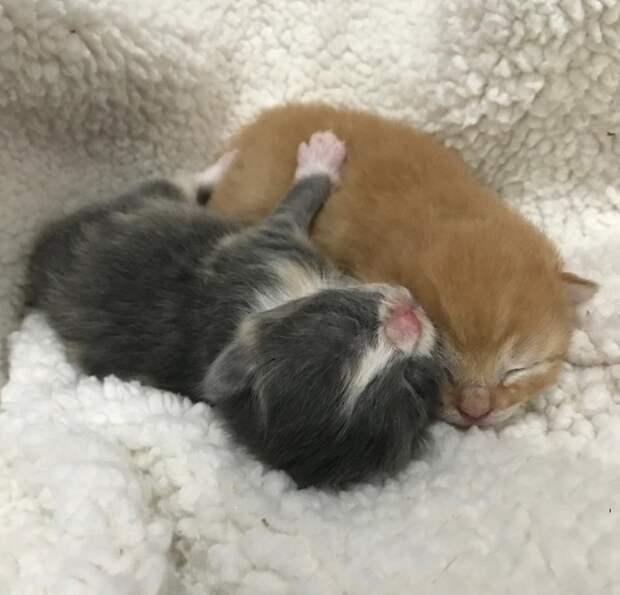 Бродячую кошку искали 3 года, и она пришла к людям с подарком в животе история, история спасения, котята, кошка, кошки, мило, трогательно