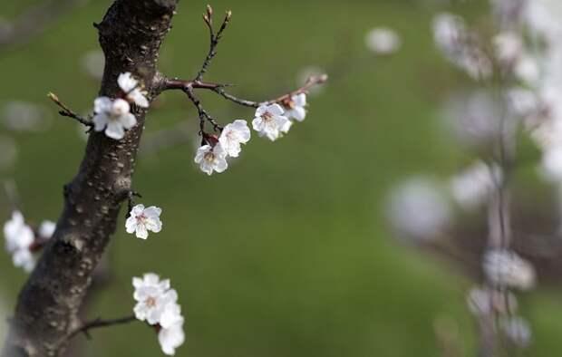 Синоптик поделился долгосрочным прогнозом на предстоящие весну и лето