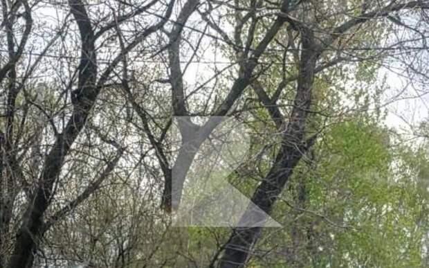 Рязанец выложил фотографию повисшего на проводах дерева
