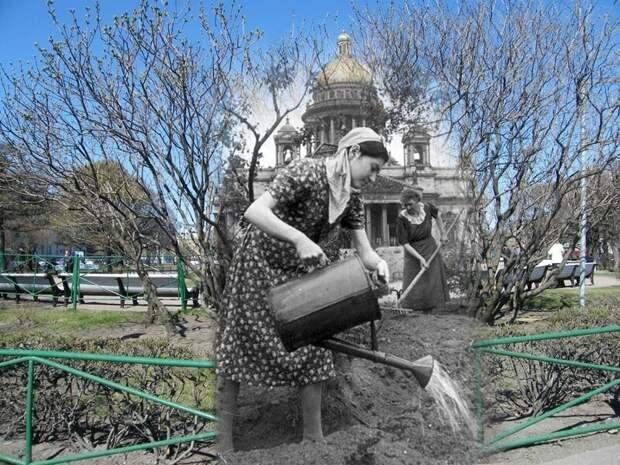 Ленинград 1942-2009 Исаакиевская площадь. Уход за огородом блокада, ленинград, победа