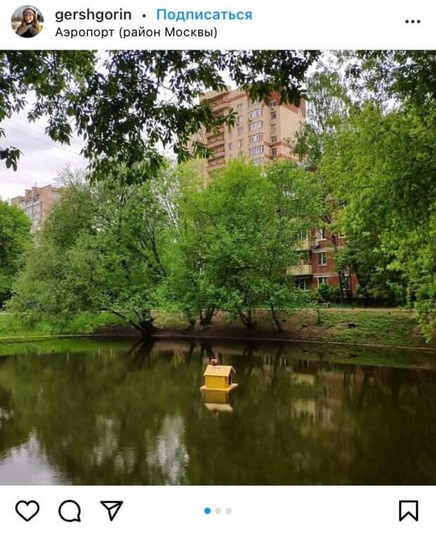Фото дня: утка отдыхает в плавучем домике в Цветковском пруду