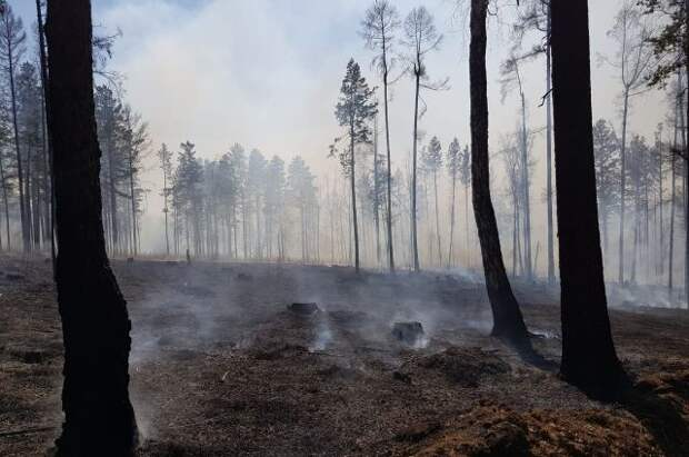 В России тушат лесные пожары на площади 55 тыс. га