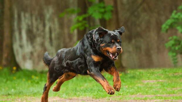 Крупные собаки для квартиры: топ-5 пород