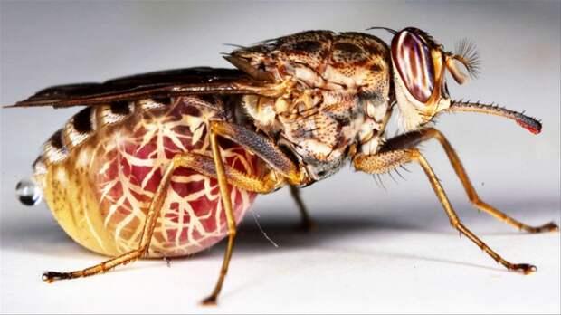 Топ 5 насекомых убийц