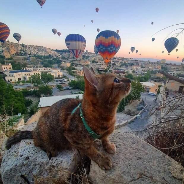 Два путешественника: шотландец и его верная... кошка!