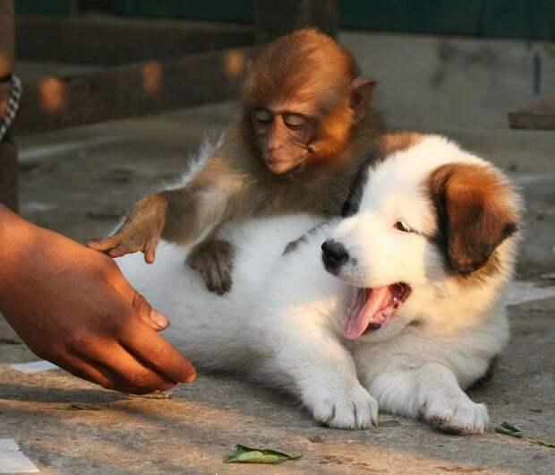 10 угарных фото животных, на которых происходит какая-то дичь