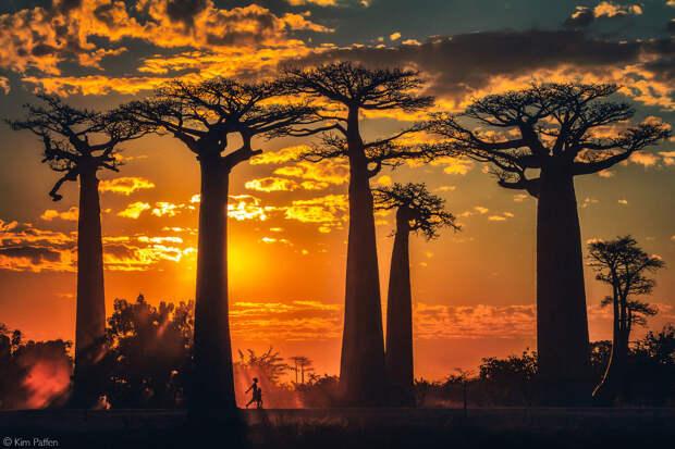Лучшие фотографии Африки 2020
