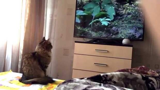 Ученые определили, как питомцы смотрят телевизор