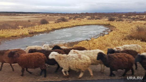 Вкурганском селе нашли десятки трупов животных
