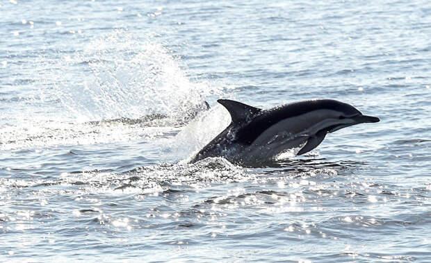 Убить дельфина