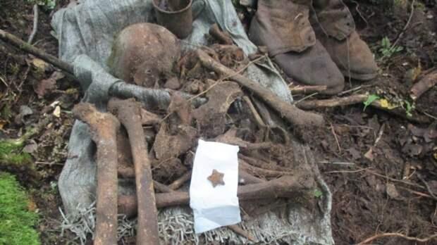 В Новгородской области найдено массовое захоронение времен Второй мировой войны