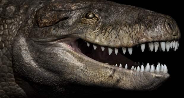 Останки хищника времен Юрского периода были обнаружены на Мадагаскаре