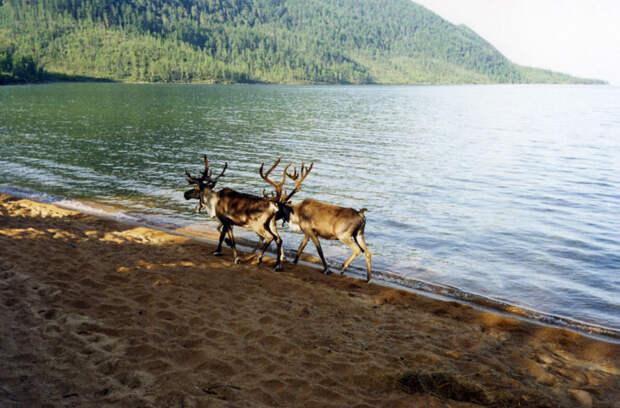 берега озера байкал
