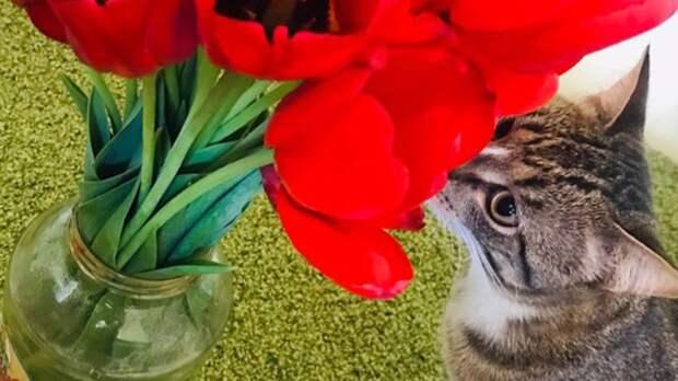 Любитель тюльпанов Жорик стал победителем десятой недели конкурса «Главный котик Омска»