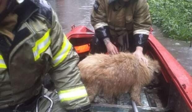 Спасатели вытащили собаку иззатопленного подвала дома на Ленина вРостове
