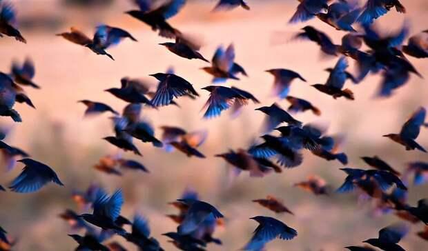 50 миллиардов: ученые подсчитали, сколько птиц на Земле