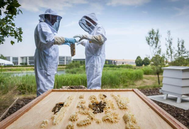Rolls-Royce ищет людей на вакансию пчеловода. Но для чего?