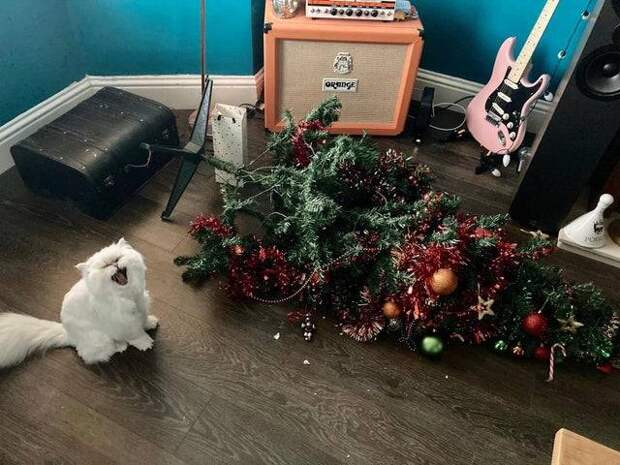 С котом в доме скучно не бывает: 13 смешных фото