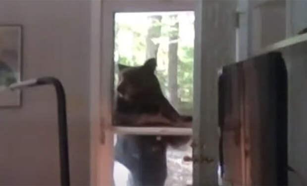 Мужчина ставил дома музыку и не заметил, как в дверь начал стучаться медведь