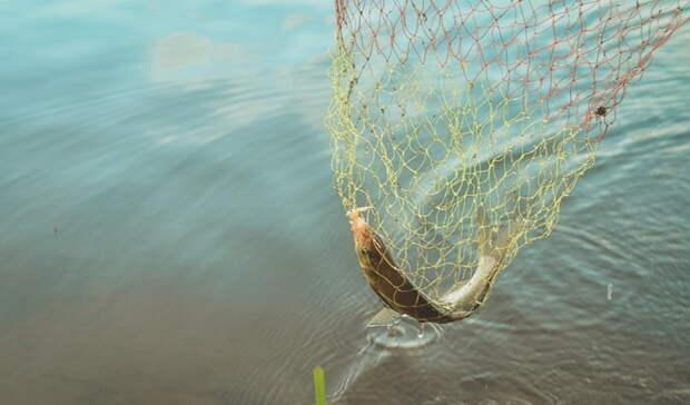 Омич попался наловле краснокнижной рыбы иполучил срок
