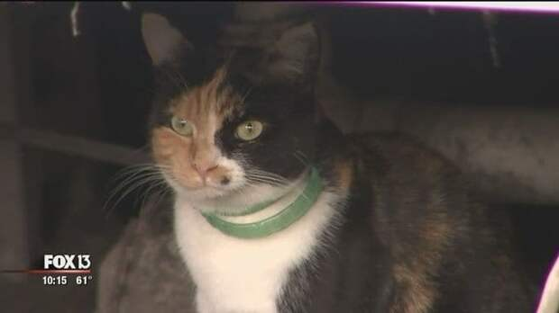 Во Флориде кошка спасла пятерых человек от пожара
