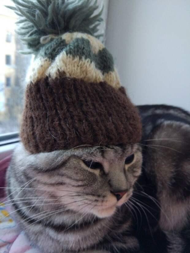 Кошка – кто её поймёт? С нею надо просто ладить…