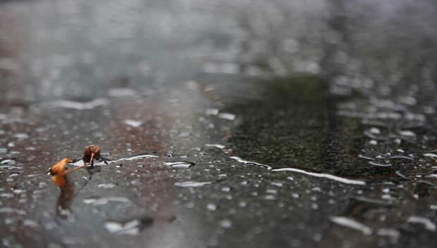 Дождь и новый температурный рекорд ожидаются в четверг в Подольске