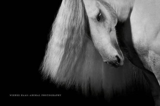 Сэмми животные, искусство, лошади, фотография