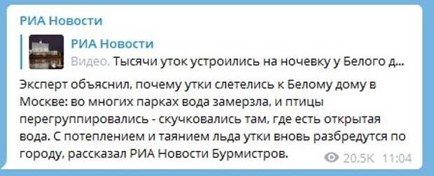 Ничего милее вы больше не увидете: у Белого дома в Москве поселились дикие утки