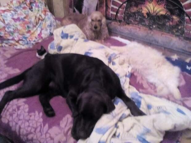 Вдруг откуда-то из темноты к собакам под ноги выбегает котенок - тощий, мокрый, холодный...
