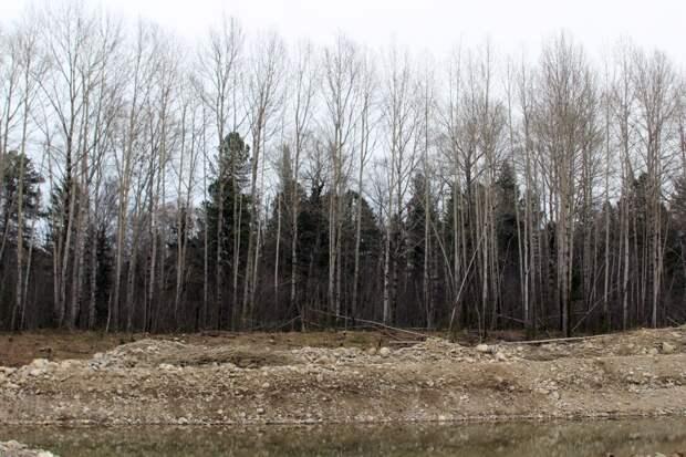 505 населенных пунктов Иркутской области подвержены лесным пожарам