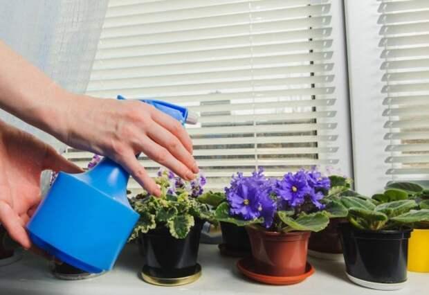 5 ошибок в поливе комнатных растений, из-за которых цветы чахнут и вянут