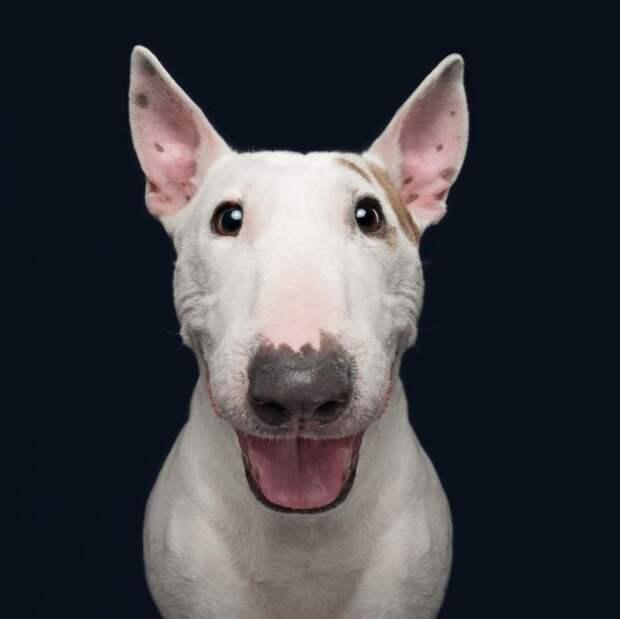 Эмоции собак в фотографиях (21 фото)