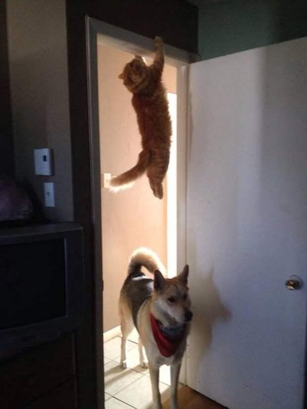 15 правил жизни настоящего кота