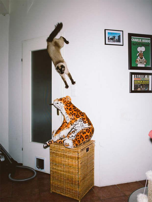 Австрийский фотограф снимает летающих котов животные, кот, фотограф