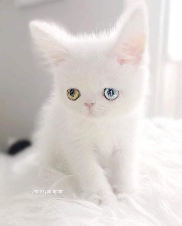 Котёнок с необыкновенными глазами загипнотизировал Инстаграм