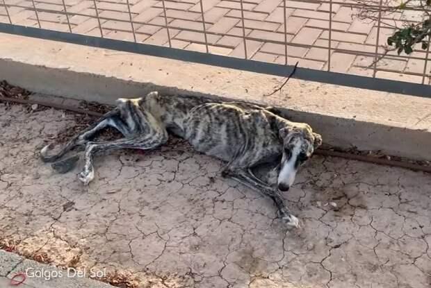 Худая собака выла от страха и отчаяния, лежа посреди улицы