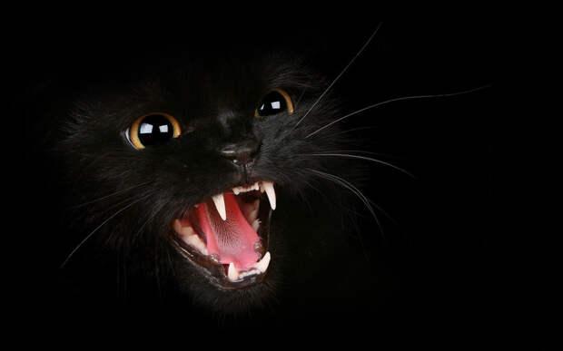 Приходящая к людям по ночам нечисть, которую чувствуют и очень боятся кошки