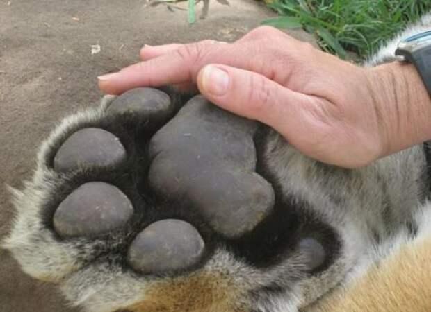 Гиганты: 10+ животных, чей реальный размер можно оценить лишь в сравнении