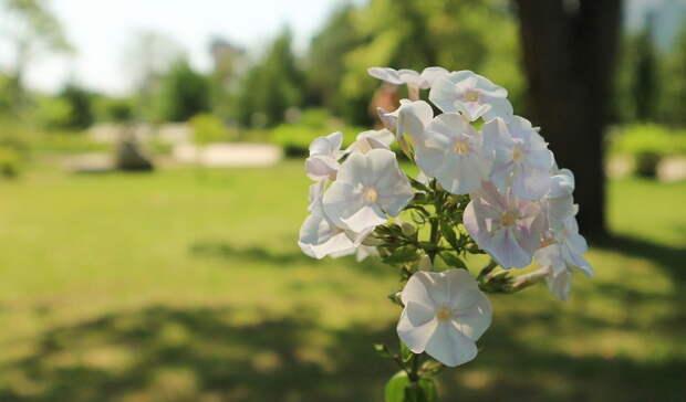 В Башкирии аномальная жара продержится еще несколько дней