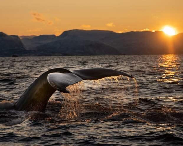 На Сахалине местные жители пытались спасти кита, которого выбросило на берег (видео)