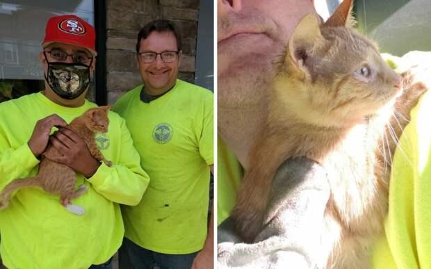 Рабочие спасли котенка, которого оставили в закрытом пакете и выбросили